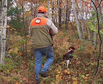 American Brittany Bird Hunting Dogs