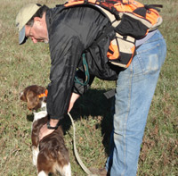 Pennsylvania Brittany Dog Trainer