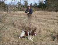 Training American Brittany Hunting Dogs